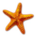 Starfish Story Inspiration
