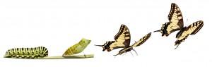caterpillar transforms into butterfly