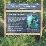 First Look at Pandora – World of Avatar at Disney's Animal Kingdom #VisitPandora